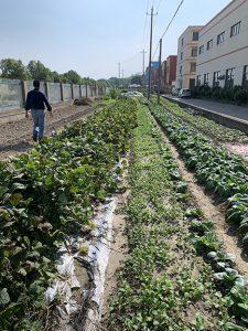 factory crops